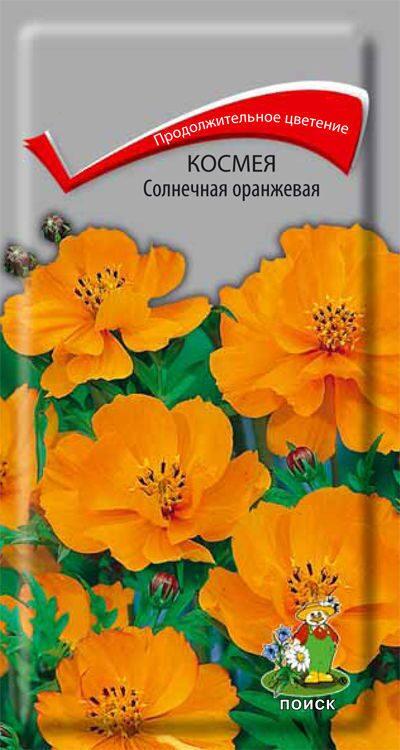 космея оранжевая фото